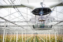 horticulture-glastuinbouw-specialist