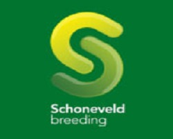 Schoneveld breeding